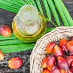 Is Palm Oil Paleo? (+ The Different Types of Palm Oil)